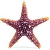 """Грот """"Морская звезда"""", полиэфирная смола, 16*16*3 см"""