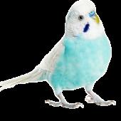 Для мелких птиц
